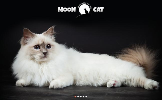 Animals WordPress Themes