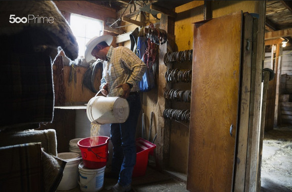 Rancher-Filling-Bucket-with-Grains-in-Barn