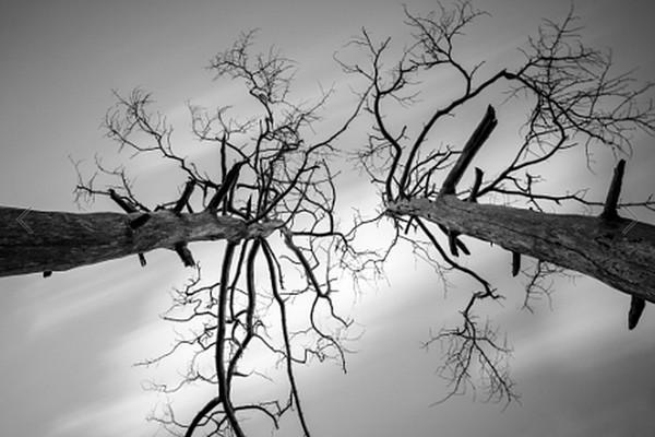 Sky-through-Tree