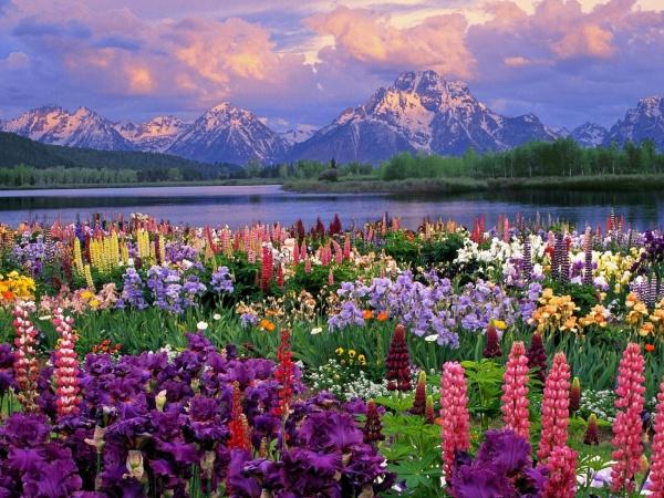 Beautiful Flower Backgrounds
