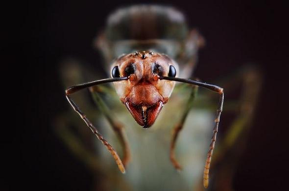 Ant (2)