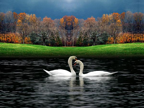 Beautiful Wallpaper of Nature