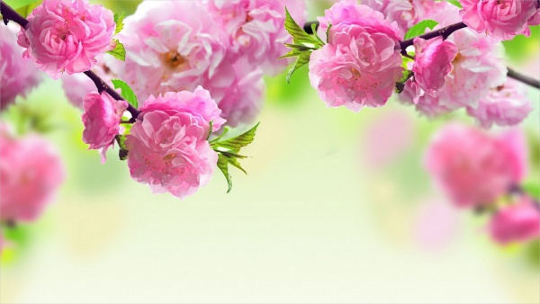 Colorful-Spring-Flower-Background