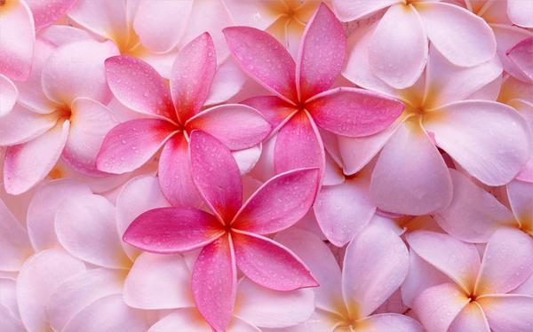 Colorful-Tropical-Flower-Backgrounds