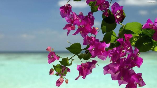 Fanstastic-Summer-Flower-Background