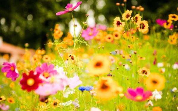 Free-Flower-Background-Design