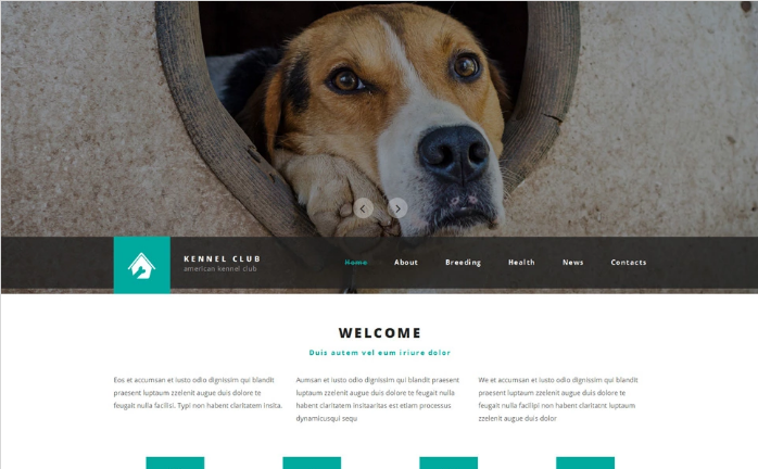 Best Animals HTML Website Templates
