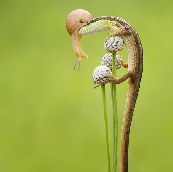 Lizard-and-snail