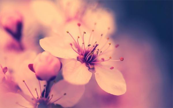 Stunning-Hd-Flower-Background