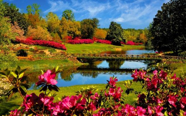 Wonderful-Flower-Desktop-Background