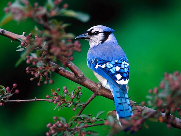 beautiful-nature-bird-wallpaper
