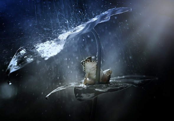 frog-rain