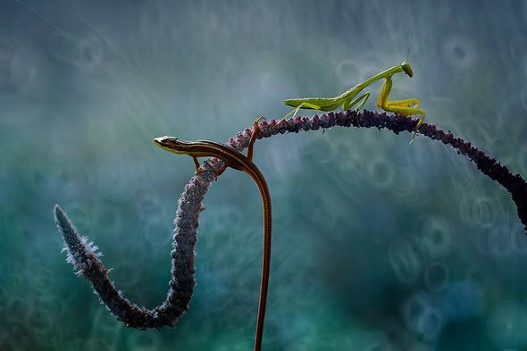 insect-vs-reptile