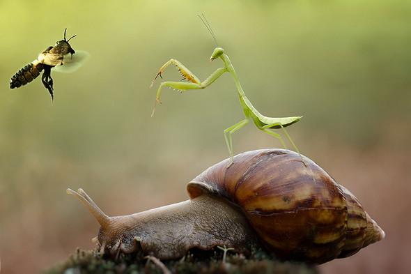 mantis-fight