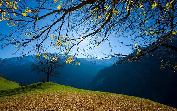 nature-background-image