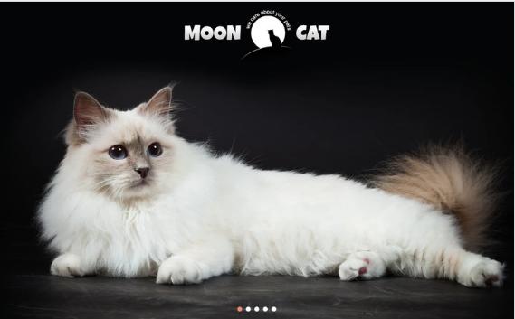 Conceptual Cat WordPress Theme