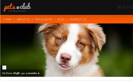 White Animals & Pets WordPress Theme