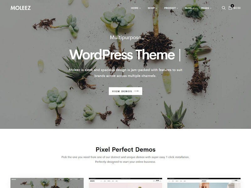 Moleez Minimalist WordPress Themes